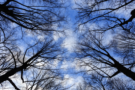 Tree branches in silhouette and blue sky with White clouds