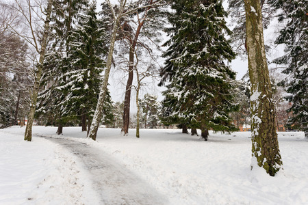 Winter landscape in park in Stockholm, Sweden Stock Photo