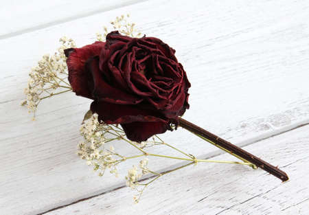 A dried rose flower with gypsophila on a white wooden background. photo