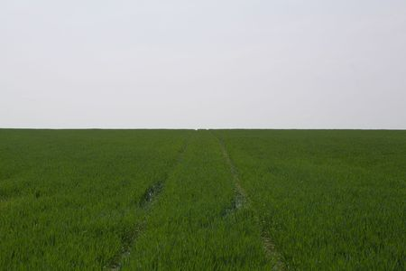 two wheel: looking up at a green field with two wheel tracks going up the hill Stock Photo