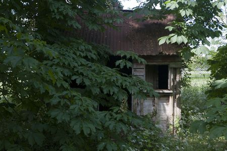 over grown: old run down garden shed with over grown trees all around  Stock Photo
