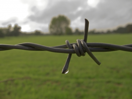 Barbed wire with green landscape behind Stock Photo - 20018096