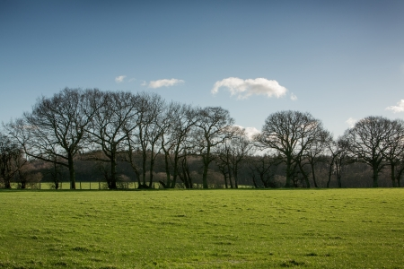 treeline: landscape image of a line of trees and grass Stock Photo