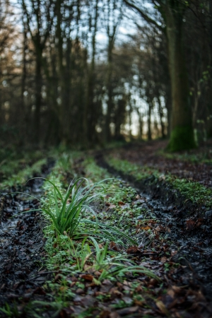 imprinted: country  muddy path with wheel tracks imprinted  Stock Photo
