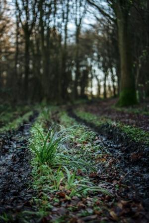 muddy tracks: country  muddy path with wheel tracks imprinted  Stock Photo