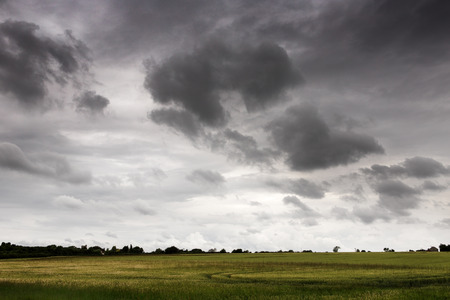 mersea: shot taken on east mersea island looking across a field with a moody sky