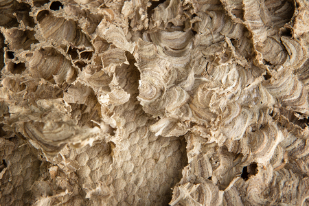 close up image: Close up image of the structure inside a wasps nest