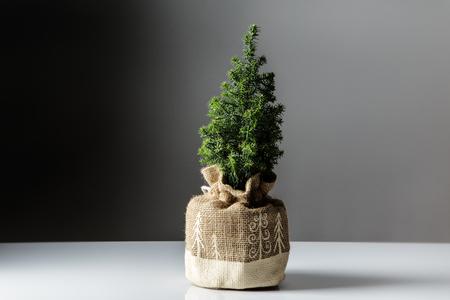 hessian bag: mini christmas tree shot in the studio in a hessian bag