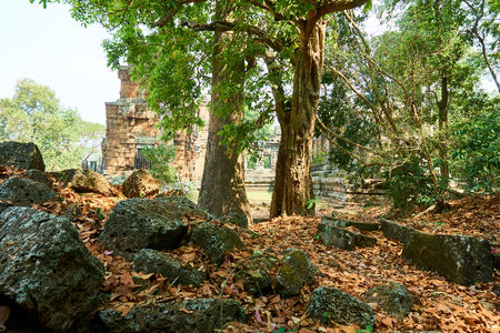 Wall in the wood in temple complex Angkor Wat Siem Reap, Cambodia tree Stock Photo