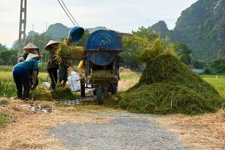 Tam Coc, Vietnam - June 8, 2019: Vietnamese farmers harvest Rice