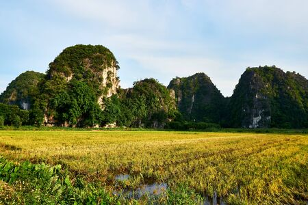 Landscape with mountains and Rice field in Tam Coc Vietnam. 免版税图像