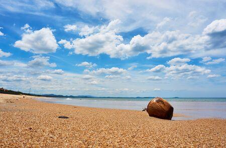 Coconut at Beach in Tuy hoa Phu yen in vietnam