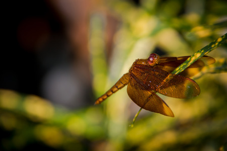 Colse up Dragonfly summer on nature