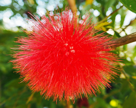 Red Spike Flower Stock Photo