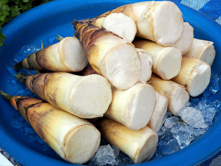 Fresh Bamboo Shoots/Bamboo Sprouts at the Local Market Standard-Bild