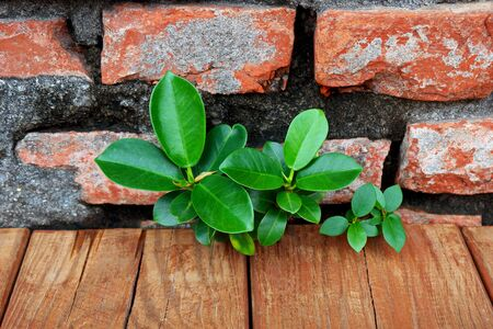 Young Green Plants Growing on the Old Brick Wall Stock Photo