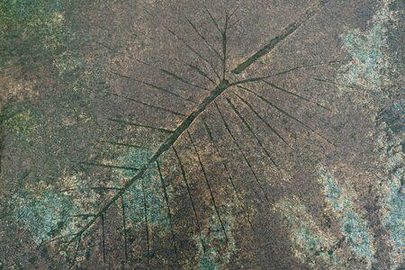 Leaf Pattern on Concrete Walkway