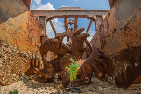 A tree growing out of an old wrecked rusty boat Archivio Fotografico