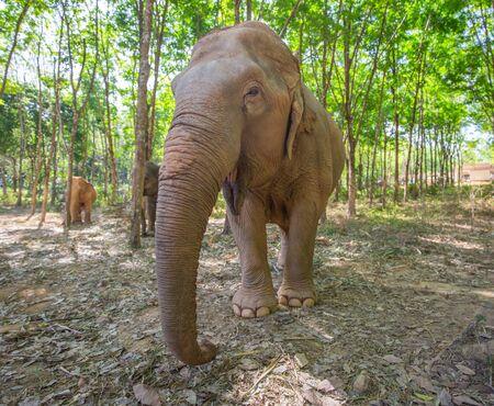 Asian elephant with evening light, green forest. Wildlife scene from nature Reklamní fotografie