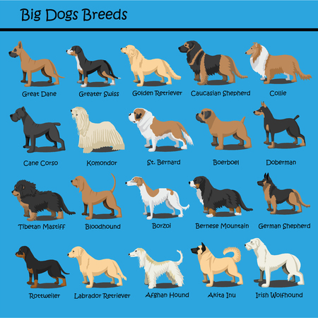 Big Dog Breeds Vector Set