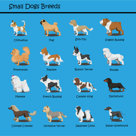 Small Dog Breeds Vector Set