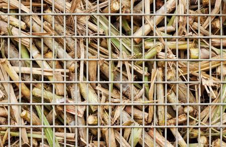 Closeup image of freshly harvested sugar cane on a cane train Stock Photo - 7415474