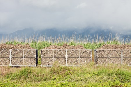 A train filled with sugar cane harvest. Sugar cane fields and cloudy mountains in the background.  photo