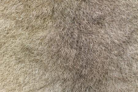 possum: A closeup of the fur of an Australian green ringtail possum (Pseudochirops archeri) Stock Photo