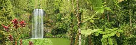 australian landscape: A very nice panorama shot of the tropical Millaa Millaa falls in Queensland, Australia.
