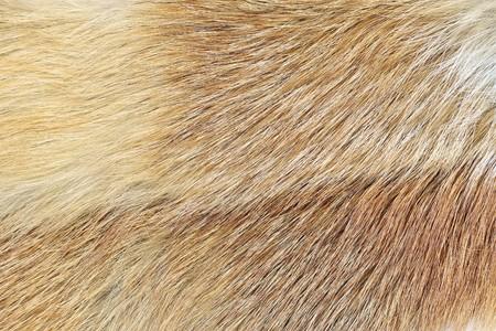 A closeup shot of mink fur. Great background, texture or wallpaper