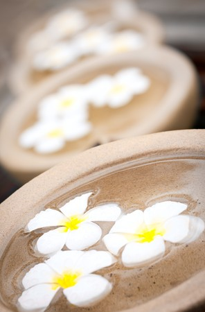 Beautiful and decorative tropical Frangipani flowers floating in water