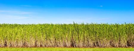 クイーンズランド、オーストラリアでのサトウキビのプランテーションの活気のあるパノラマ