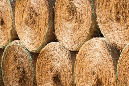 Stack of round haybales drying outdoors photo