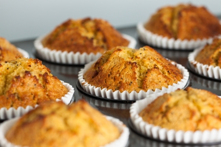 Close-up of delicious fresh home made muffins on a oven tray photo