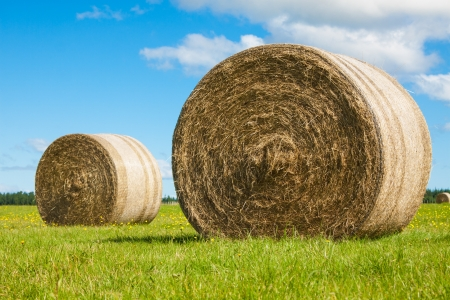 bale: Two big hay bale rollsin a lush green field and blue sky Stock Photo
