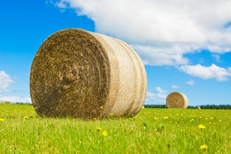 Big hay bay roll in a green field and blue sky photo
