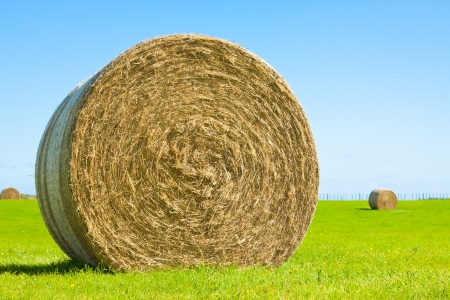 Close-up of a big round hay bale roll in a green field