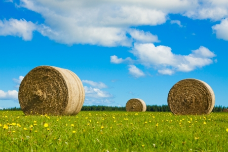 Big baia di fieno rotola in un campo verde con fiori gialli e cielo blu. Archivio Fotografico - 14261356