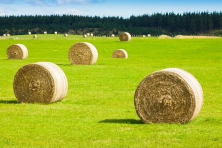 Round bay bale rolls in a green field
