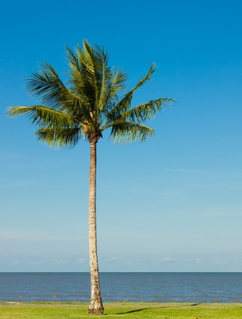 A lone coconut tree on a tropical beach front with a lovely blue sky in the background  photo