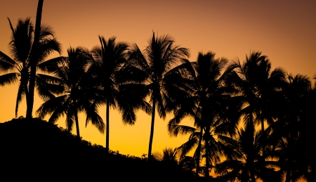 Palm trees silhouetted by a beautiful orange and pink tropical sunset Stock Photo - 15571317