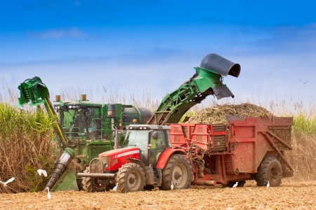 harvester: Close-up of sugar cane harvesting in Queensland, Australia  Stock Photo