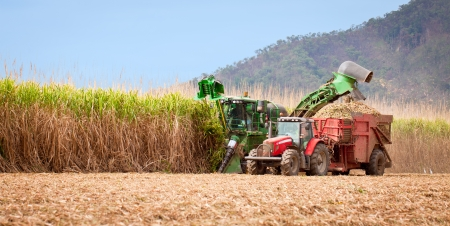farm equipment: Sugar cane harvest in tropical Queensland, Australia