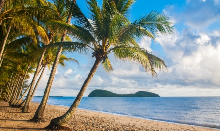 strand australie: Een mooi tropisch strand met palmbomen bij zonsopgang in het noorden van Australië