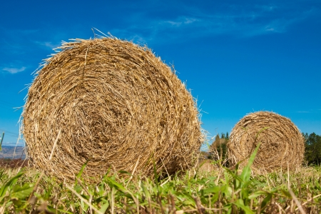 Hay bale rolls in a green paddock in Queensland, Australia photo