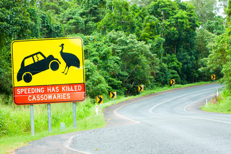 ratite: A cassowary road warning sign in the rainforest around Mission Beach, north Queensland, Australia