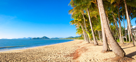 cove: A beautiful tropical beach with palm trees at sunrise in northern tropical Australia