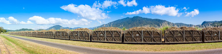 Panorama of a sugar cane train fully loaded with harvest