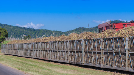 A tractor is loading newly harvested sugar cane onto a cane train in North Queensland, Australia