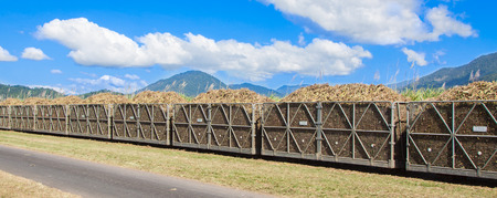 A sugar cane train filled with newly harvested sugar cane, in North Queensland, Australia